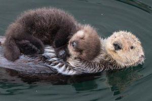 animals-cuddling-lifestyle-11